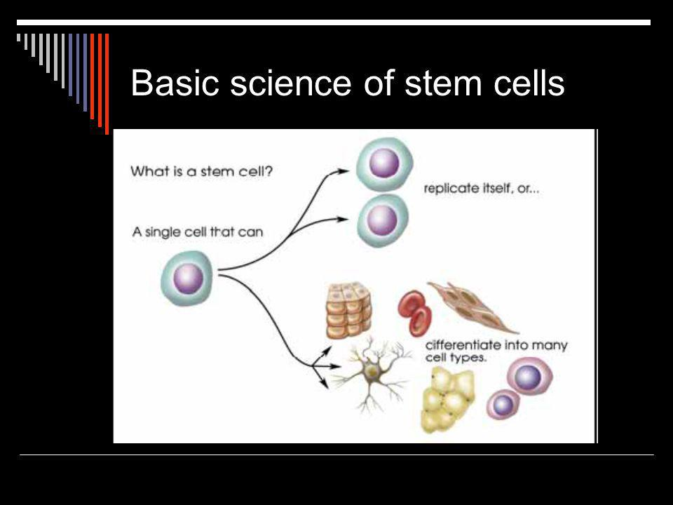 Embryonic stem cells  Obtained from blastocyst stage  Can be cultured as undifferentiated cell lines…  …or directed to develop into differentiated cells  Pluripotent: can become any cell type
