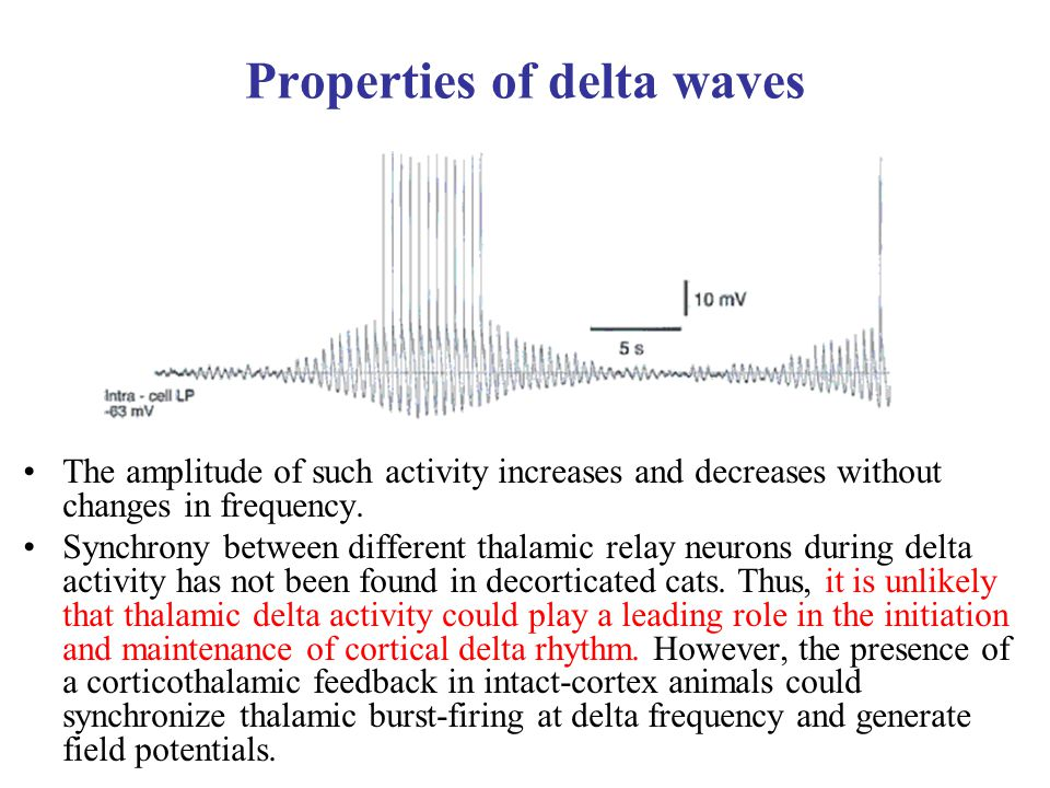 Properties of delta waves The amplitude of such activity increases and decreases without changes in frequency. Synchrony between different thalamic re