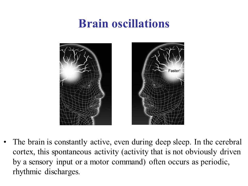 Neuronal oscillations allow for temporal segmentation of neuronal spikes.