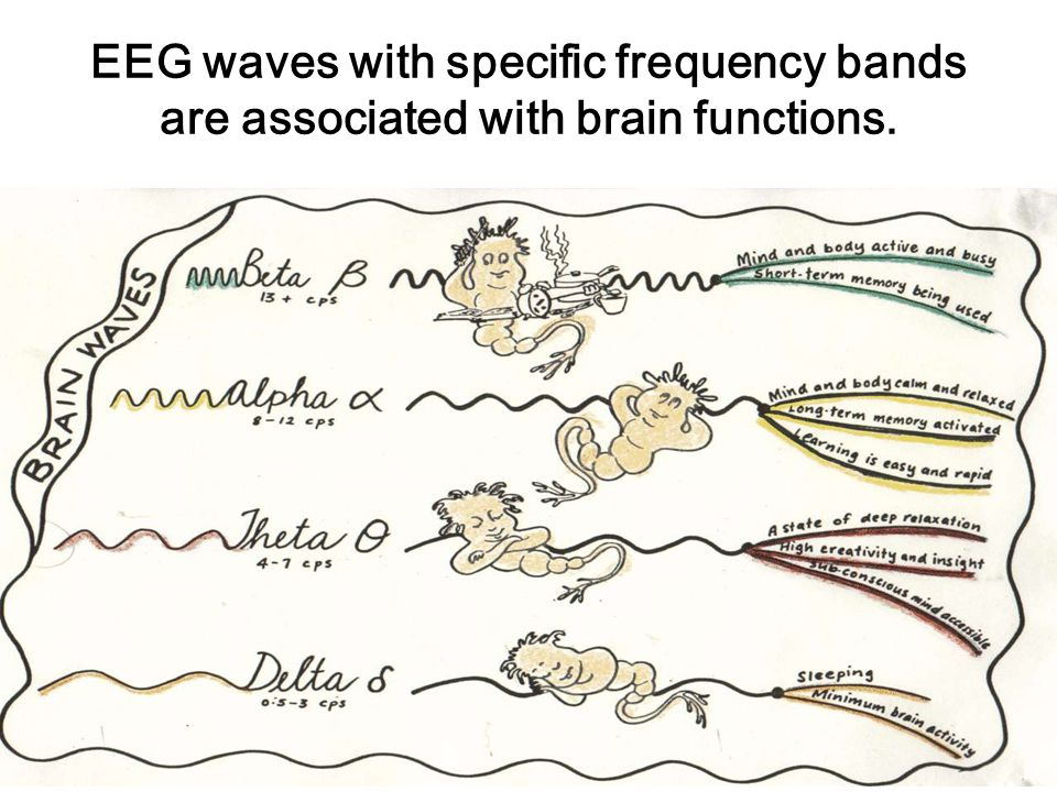 Functional role of fast oscillations for perception and behavior Moreover, it has been suggested that fast oscillations at frequencies in the so-called gamma range (> 30 Hz) may help to entrain spatially separate neurons into synchrony and thus may indirectly promote the dynamic binding of neuronal populations.