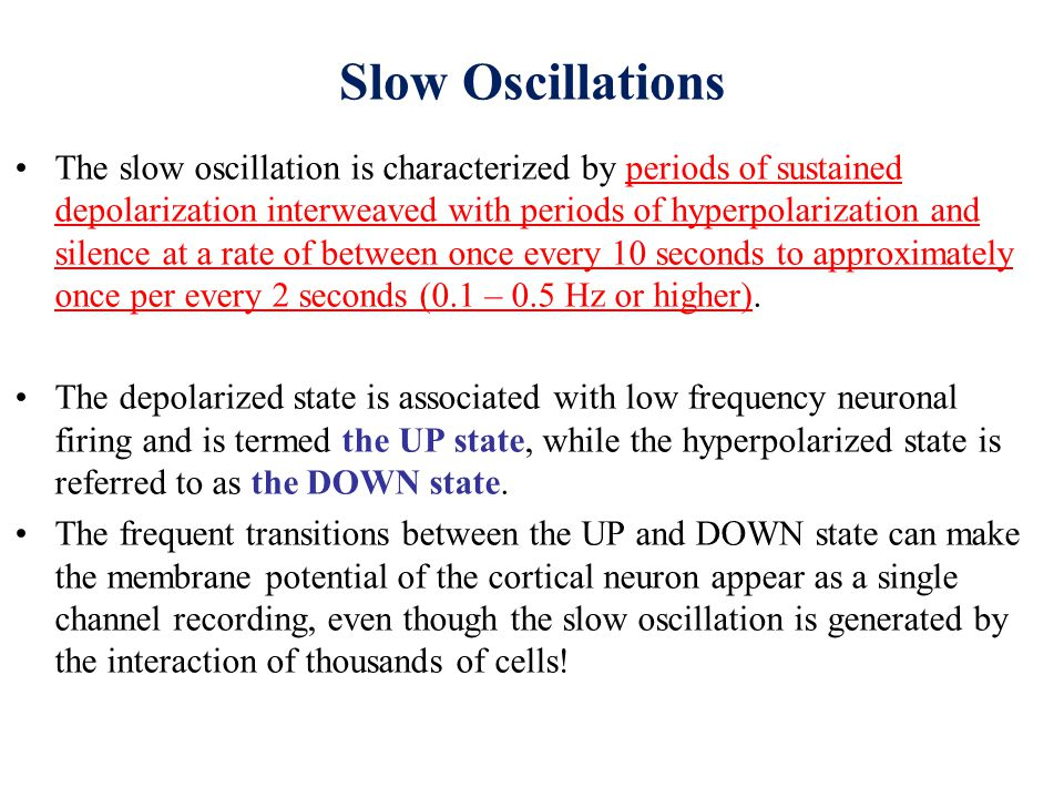 Slow oscillation in vivo and its disruption by stimulation of the brainstem.