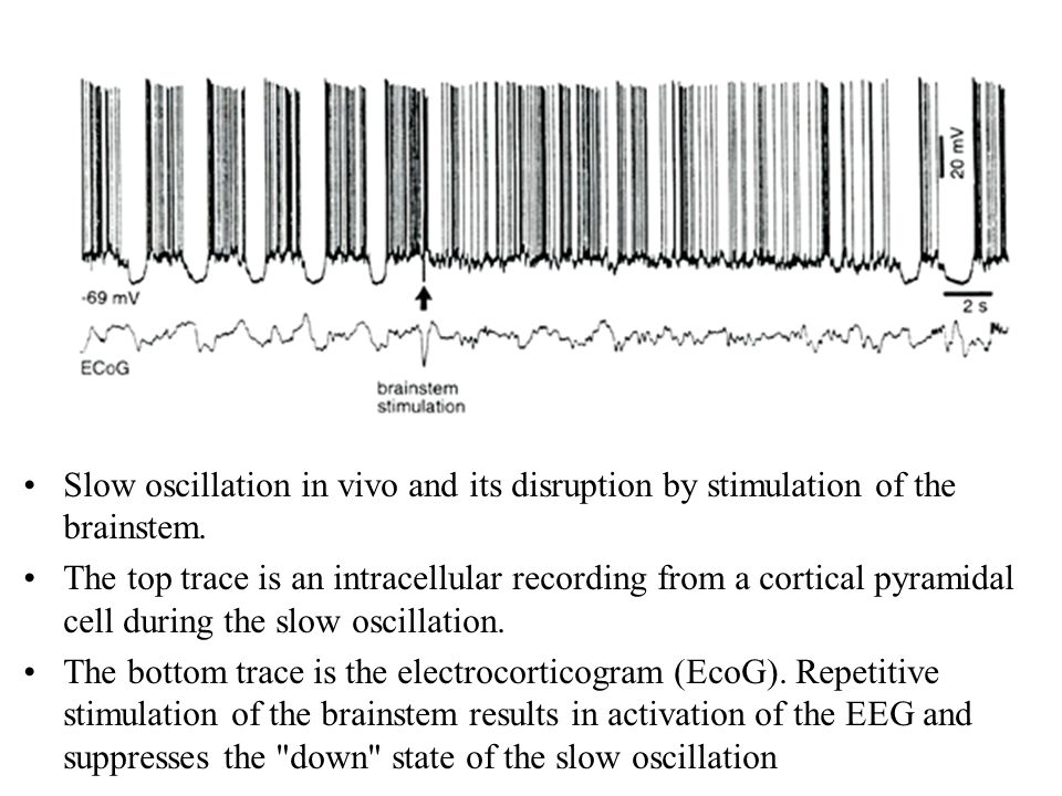 Theta-gamma oscillations