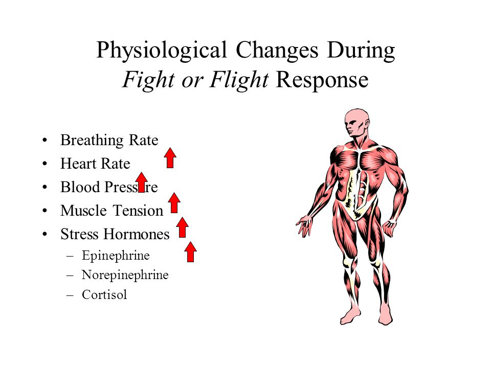 Physiological Changes During Fight or Flight Response Breathing Rate Heart Rate Blood Pressure Muscle Tension Stress Hormones –Epinephrine –Norepineph