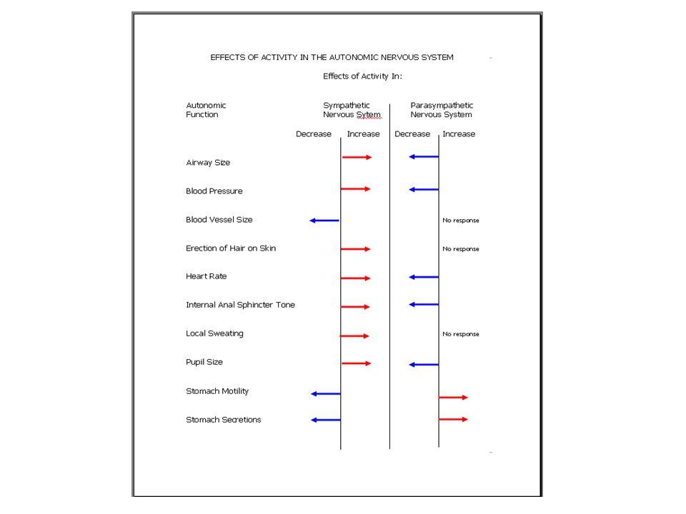 Autonomic Nervous System Sympathetic Nervous System Arousal/Fight or Flight Response Parasympathetic Nervous System Relaxation