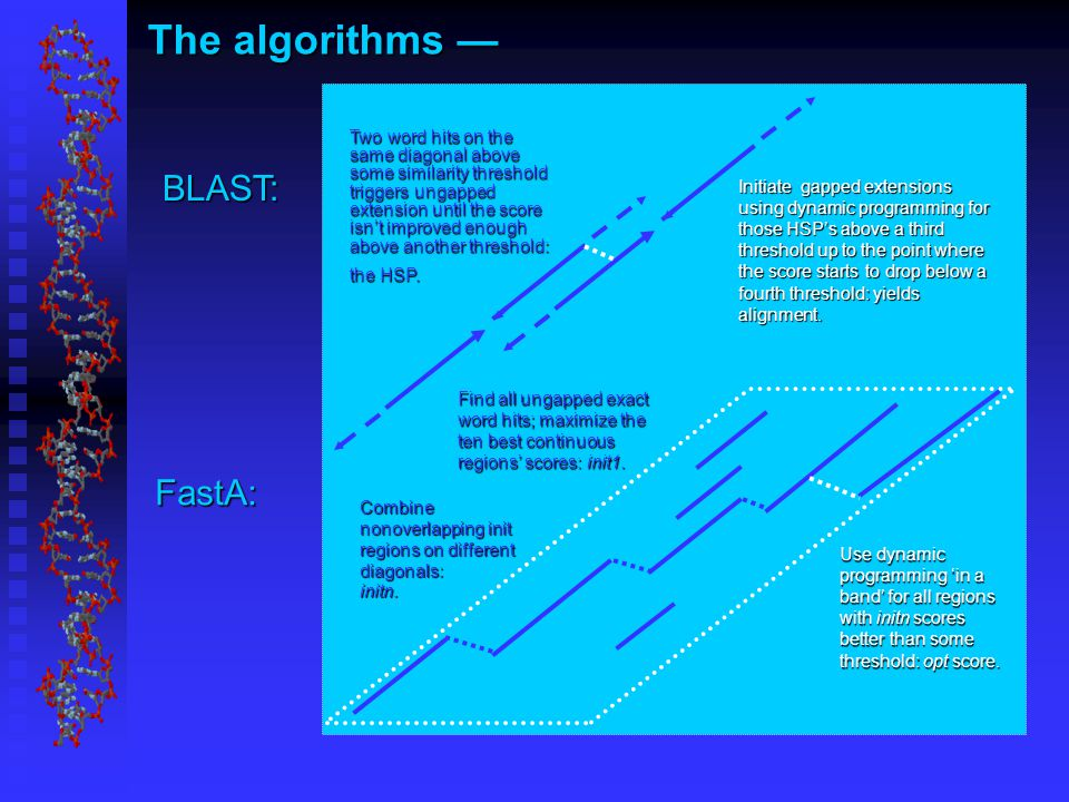 The algorithms — BLAST: FastA: Two word hits on the same diagonal above some similarity threshold triggers ungapped extension until the score isn't improved enough above another threshold: the HSP.