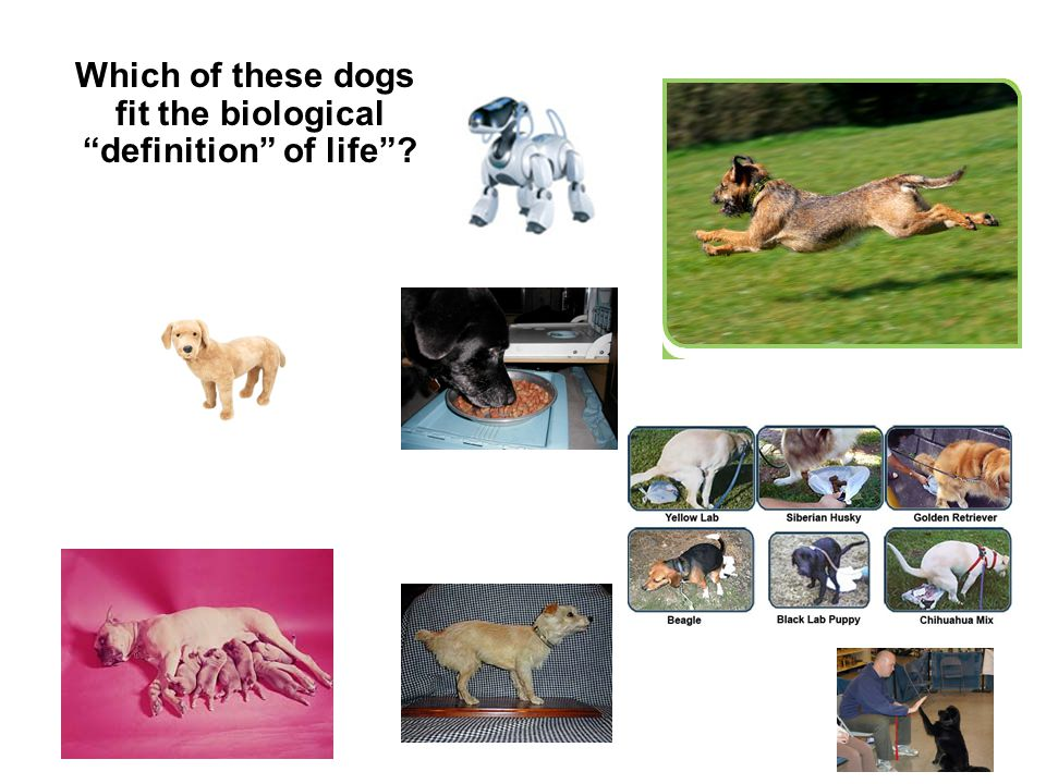 """Which of these dogs fit the biological """"definition"""" of life""""?"""