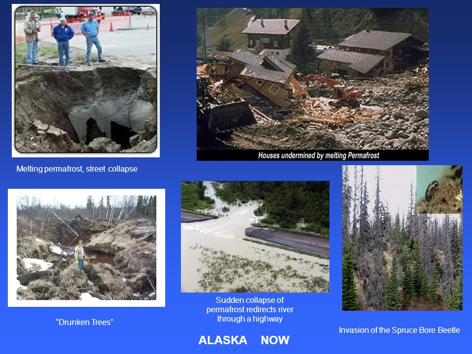Melting permafrost, street collapse Drunken Trees Sudden collapse of permafrost redirects river through a highway Invasion of the Spruce Bore Beetle ALASKA NOW