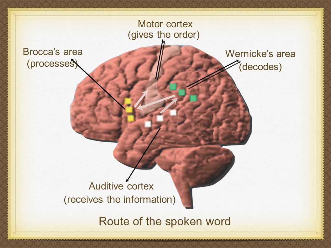 ROUTE OF SPOKEN WORD