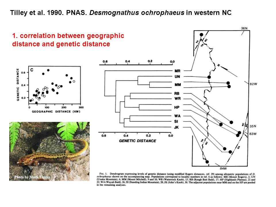 Tilley et al. 1990. PNAS. Desmognathus ochrophaeus in western NC 1.