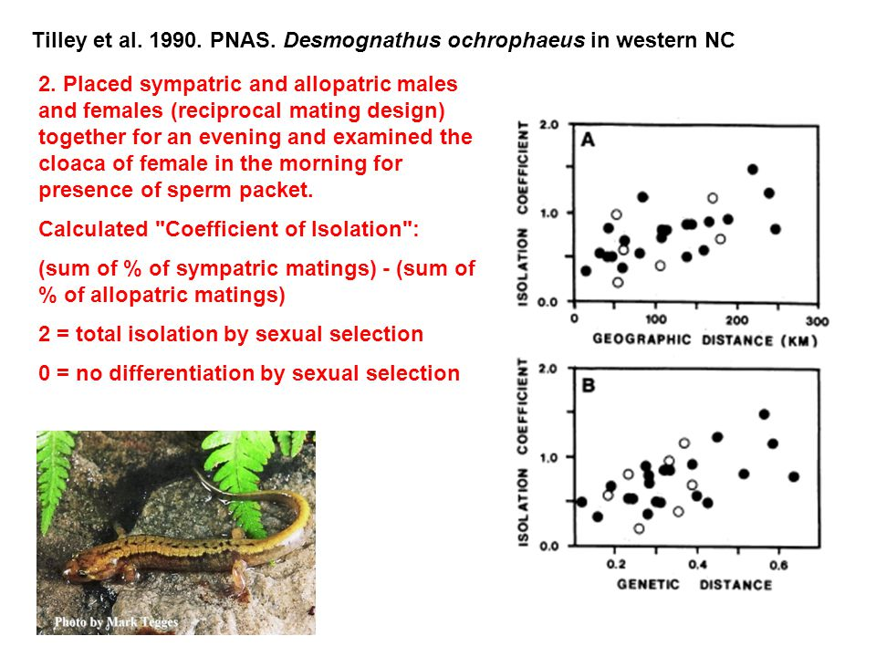 Tilley et al. 1990. PNAS. Desmognathus ochrophaeus in western NC 2. Placed sympatric and allopatric males and females (reciprocal mating design) toget