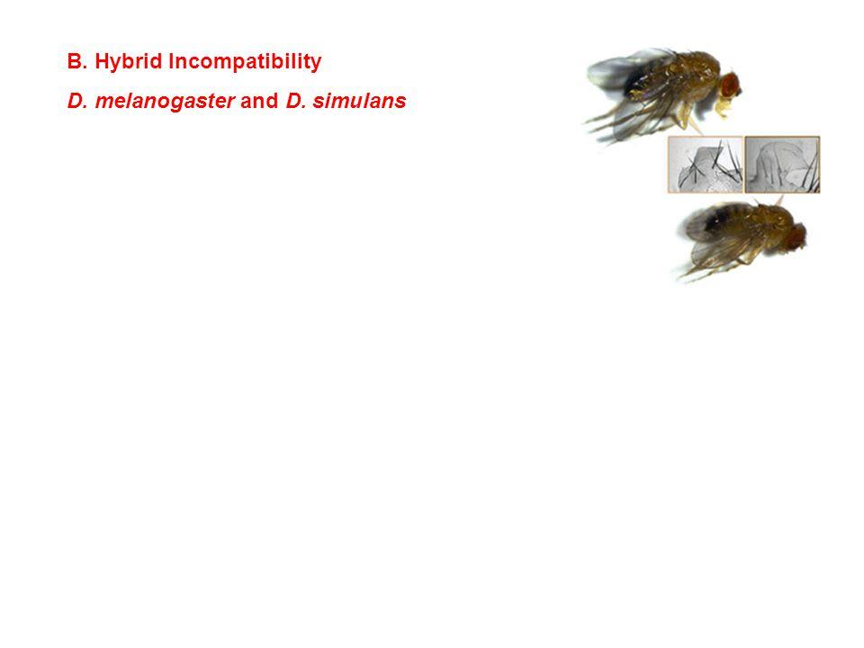 B. Hybrid Incompatibility D. melanogaster and D. simulans