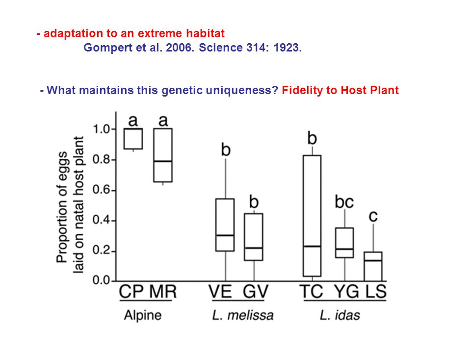 - adaptation to an extreme habitat Gompert et al. 2006. Science 314: 1923. - What maintains this genetic uniqueness? Fidelity to Host Plant