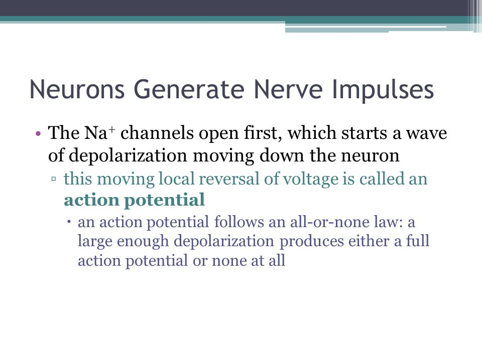 Neurons Generate Nerve Impulses The Na + channels open first, which starts a wave of depolarization moving down the neuron ▫this moving local reversal