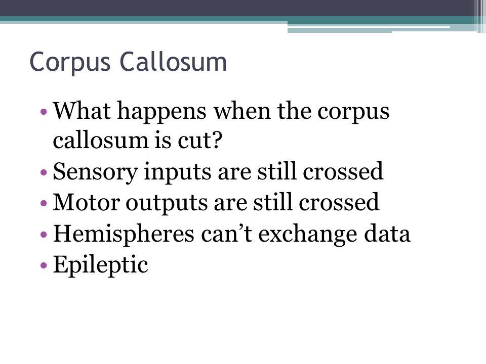 Corpus Callosum What happens when the corpus callosum is cut? Sensory inputs are still crossed Motor outputs are still crossed Hemispheres can't excha