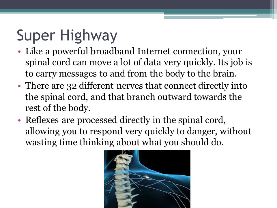 Super Highway Like a powerful broadband Internet connection, your spinal cord can move a lot of data very quickly. Its job is to carry messages to and