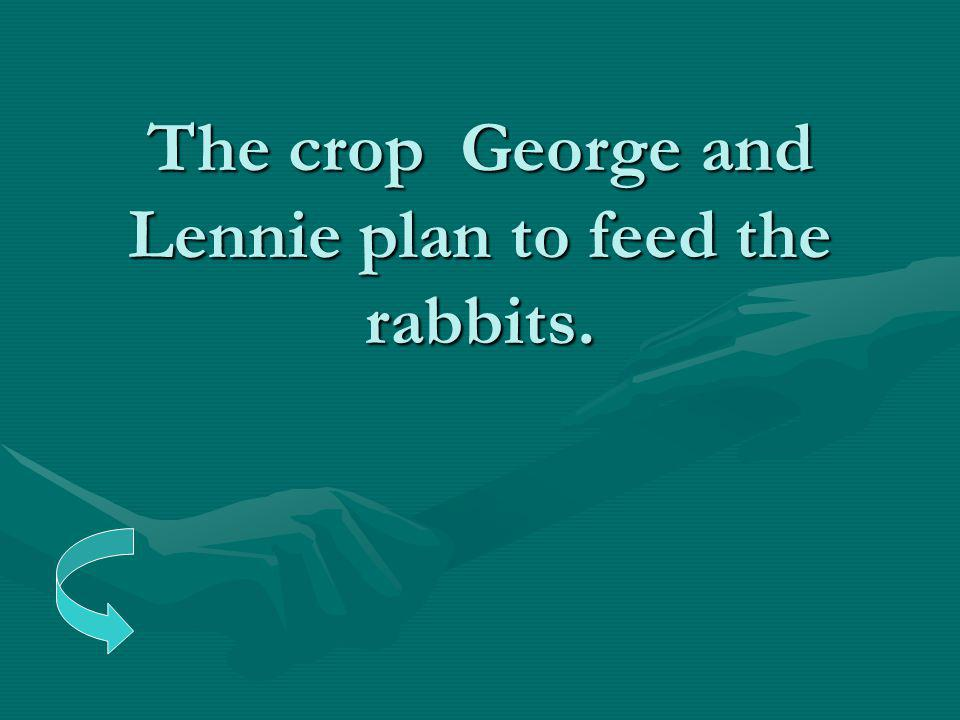The crop George and Lennie plan to feed the rabbits.