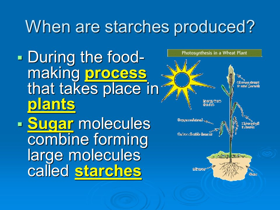 When are starches produced?  During the food- making process that takes place in plants  Sugar molecules combine forming large molecules called star