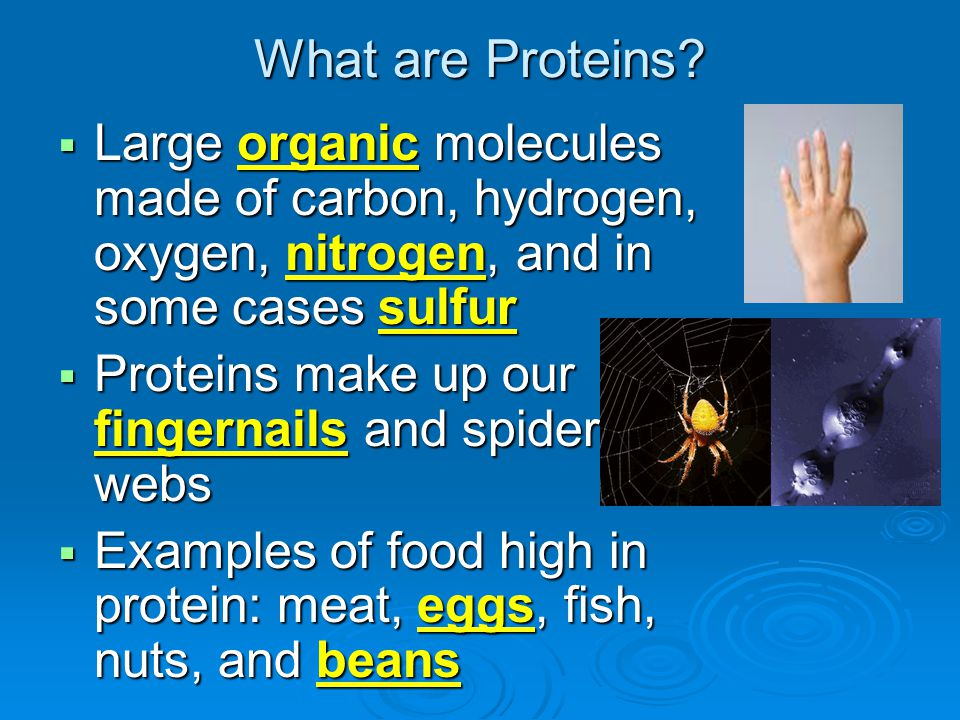 What are Proteins? LLLLarge organic molecules made of carbon, hydrogen, oxygen, nitrogen, and in some cases sulfur PPPProteins make up our fin