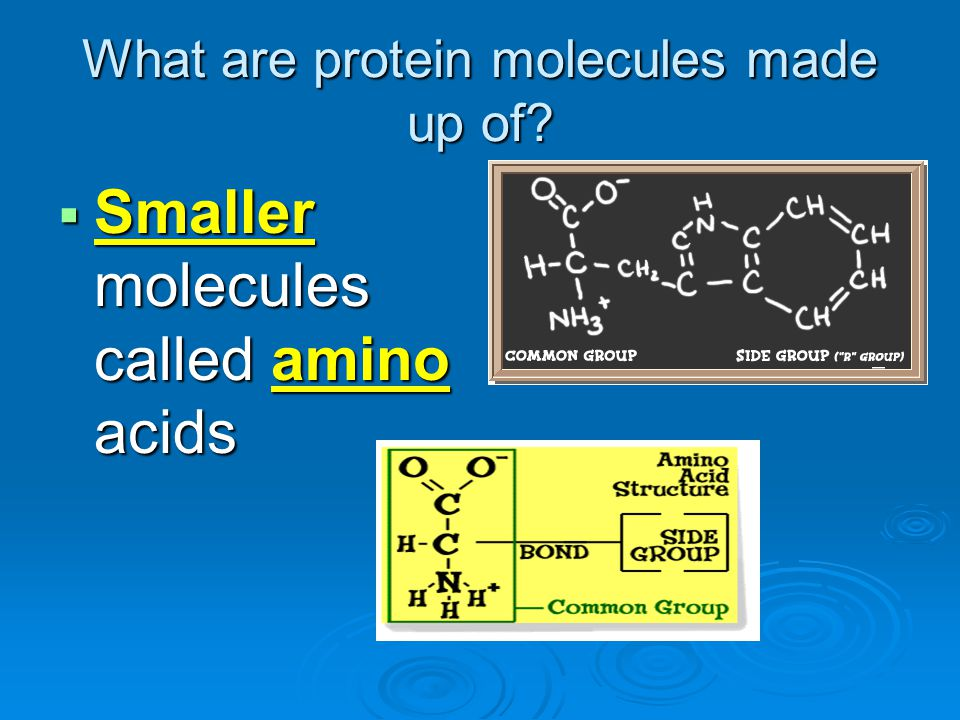 What are protein molecules made up of? SSSSmaller molecules called amino acids