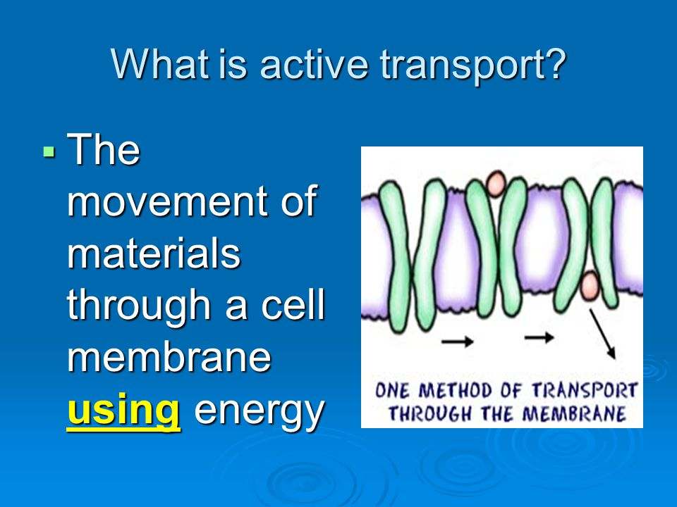 What is active transport?  The movement of materials through a cell membrane using energy