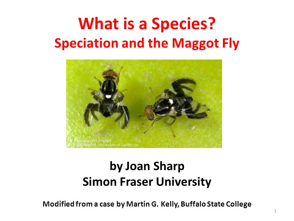 What is a Species? Speciation and the Maggot Fly by Joan Sharp Simon Fraser University Modified from a case by Martin G. Kelly, Buffalo State College