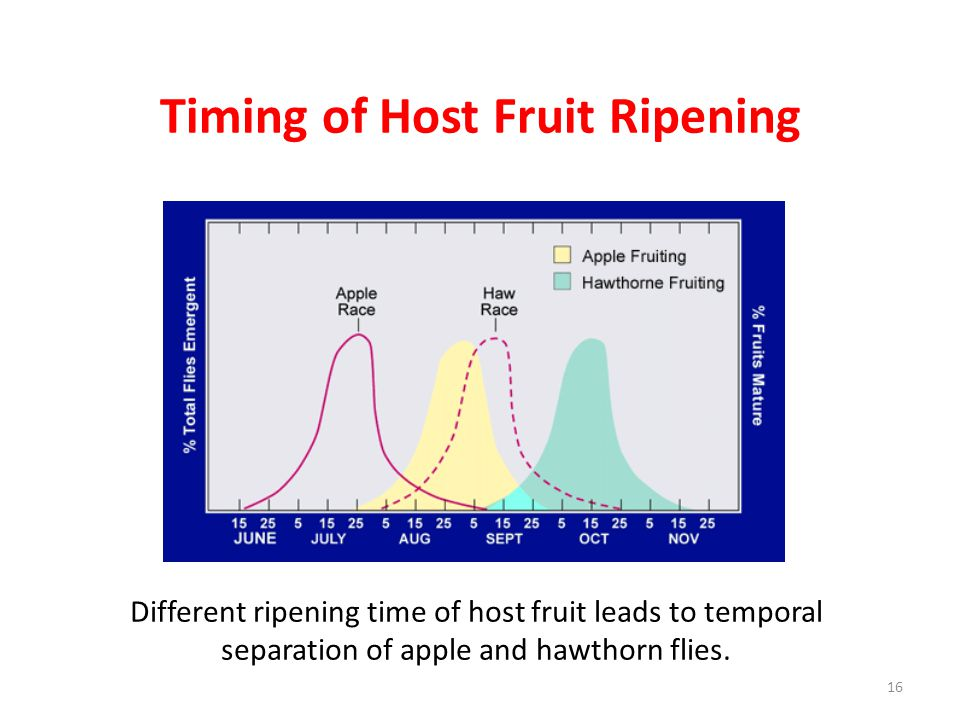 Timing of Host Fruit Ripening Different ripening time of host fruit leads to temporal separation of apple and hawthorn flies. 16