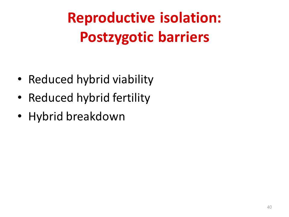 Reproductive isolation: Postzygotic barriers Reduced hybrid viability Reduced hybrid fertility Hybrid breakdown 40