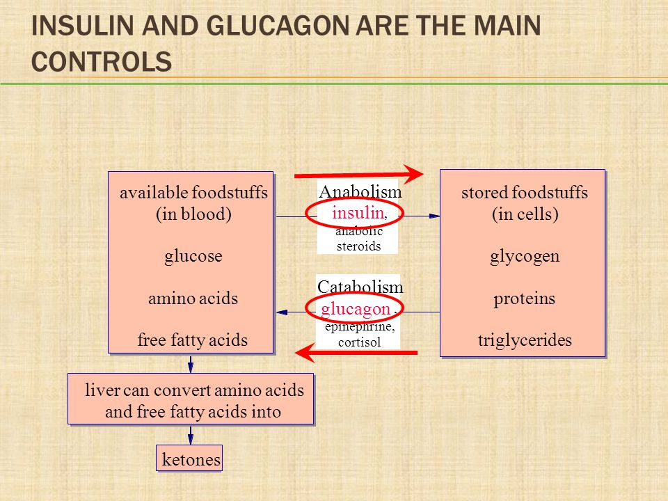 DISCUSSION Think back on your day so far. When do you think you had your highest insulin levels.