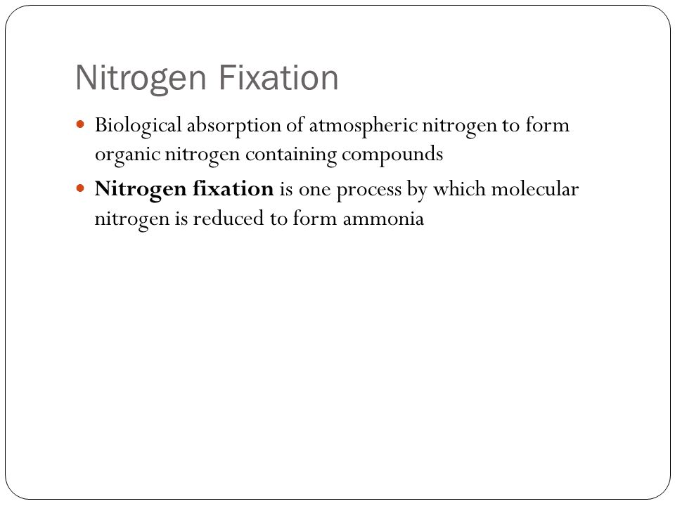 Ammonification Plants obtain nitrogen from the soil either as ammonium or as nitrate With an input of energy, plants reduce nitrogen to an organic form such as ammonium Organic nitrogen is the most reduced form of the nitrogen atom, with the highest potential chemical energy Organic nitrogen is used to construct proteins