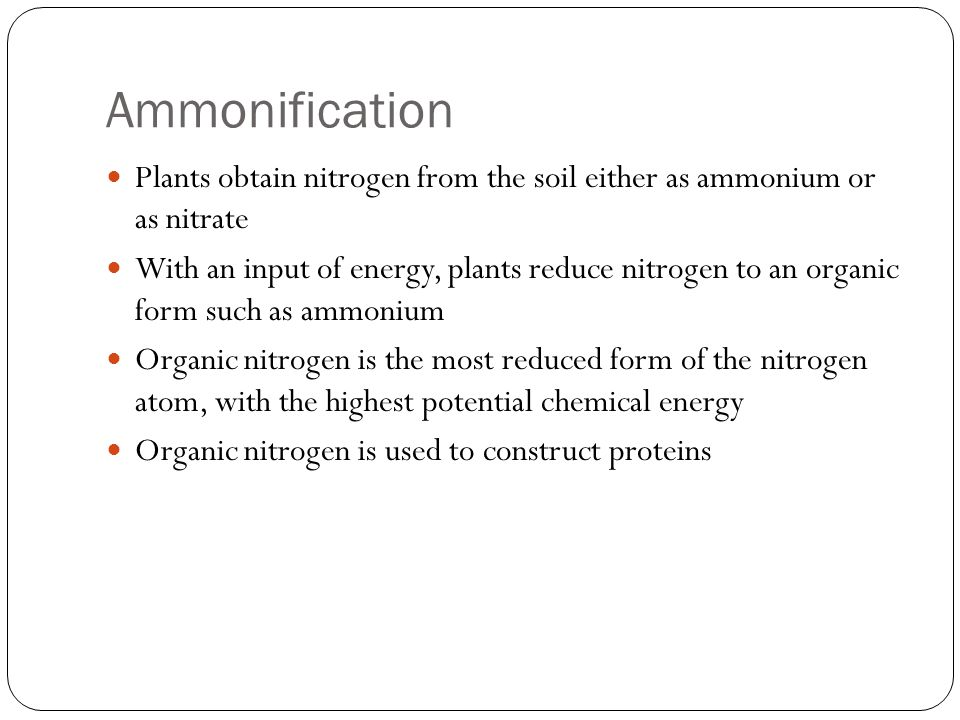 Ammonification Proteins are eventually metabolized (broken down to yield energy) Excess nitrogen is excreted into the environment as waste Hydrolysis: A chemical process that splits molecules by the addition of water Oxidation: The loss of elections from a substance involved in a redox reaction Redox Reaction: A chemical reaction involving the transfer of one or more elections from one reactant to another