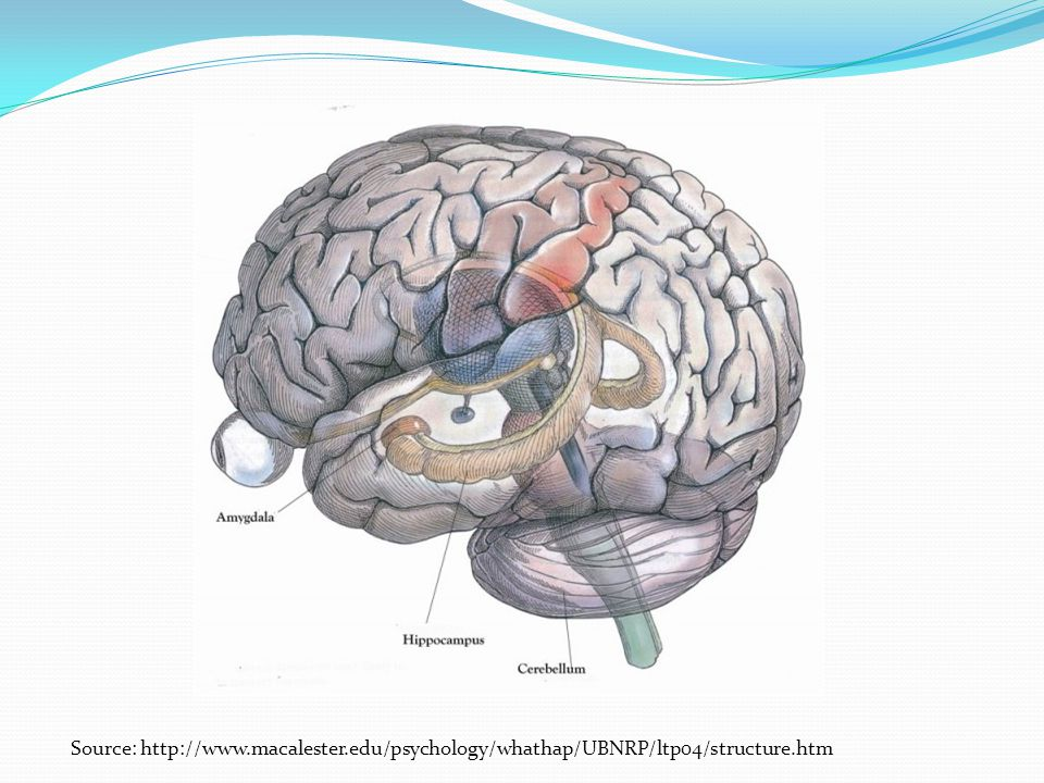 Source: http://www.macalester.edu/psychology/whathap/UBNRP/ltp04/structure.htm