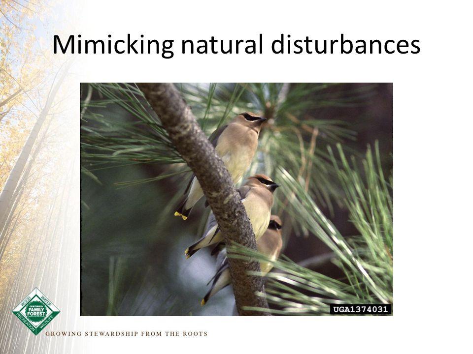Mimicking natural disturbances