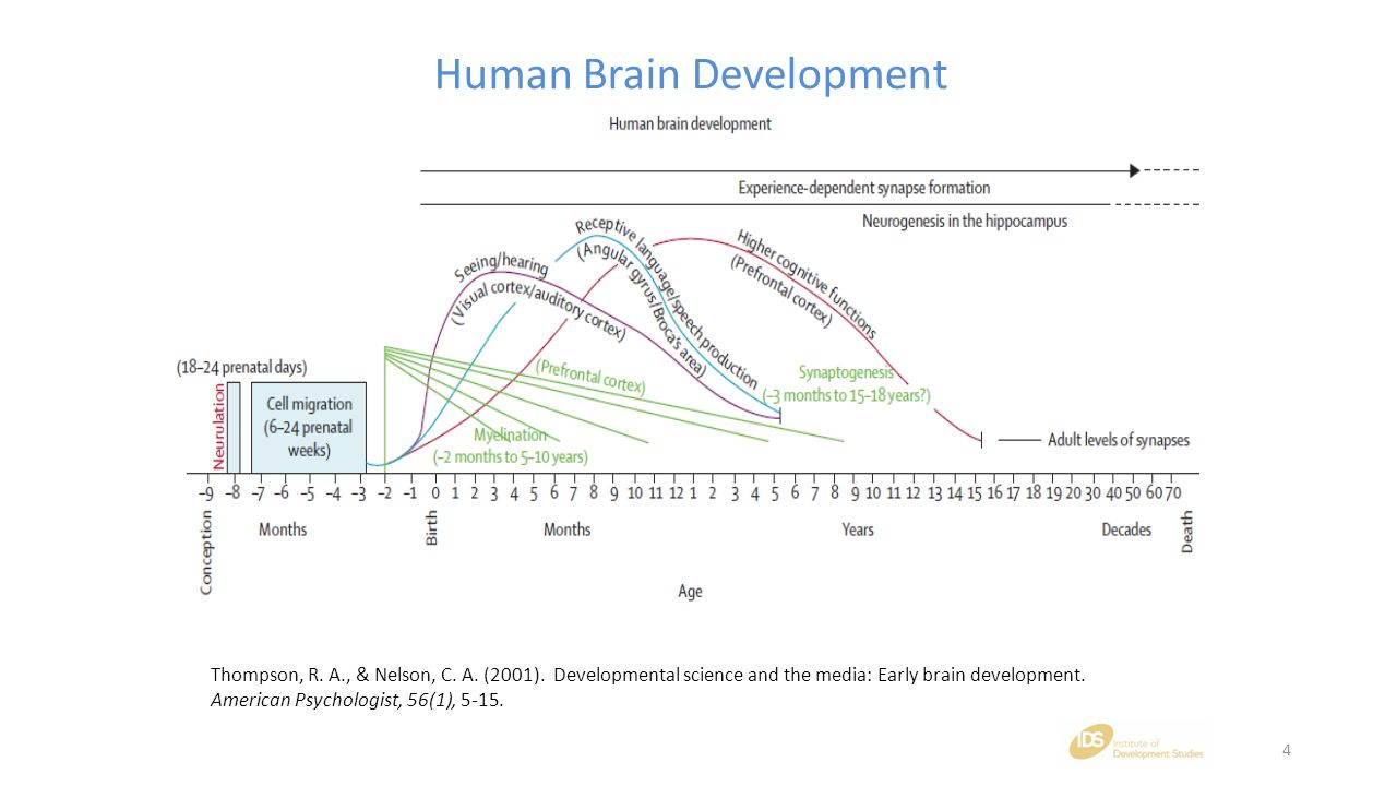 Thompson, R. A., & Nelson, C. A. (2001). Developmental science and the media: Early brain development. American Psychologist, 56(1), 5-15. Human Brain