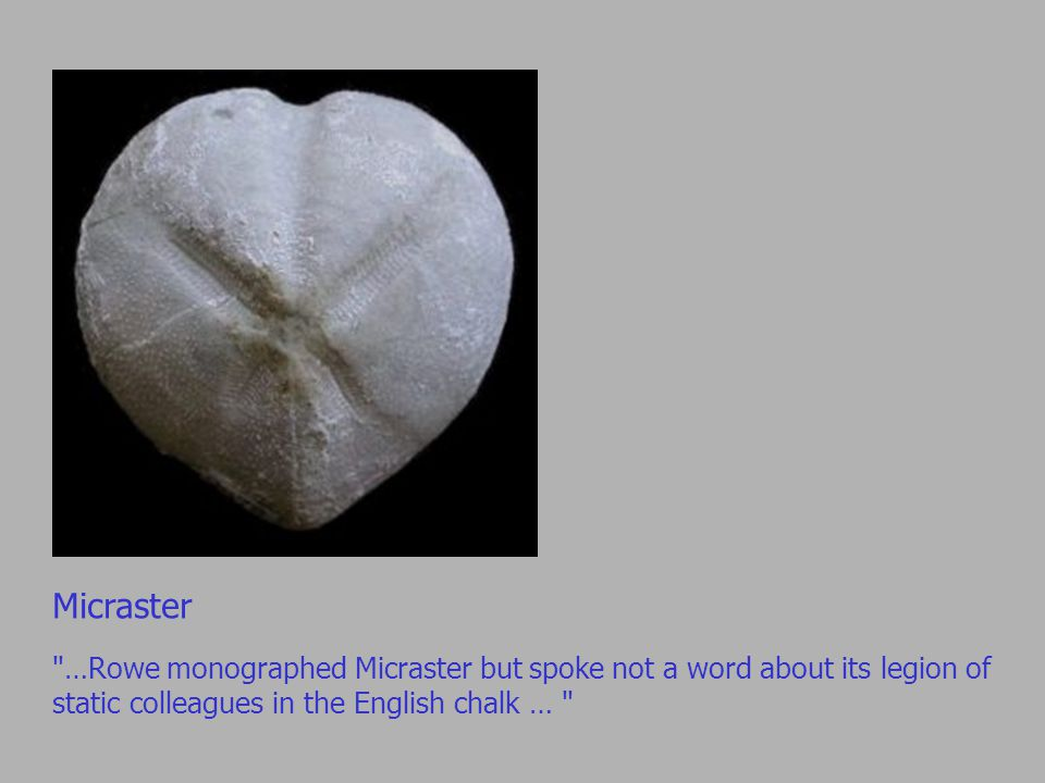 Micraster …Rowe monographed Micraster but spoke not a word about its legion of static colleagues in the English chalk …