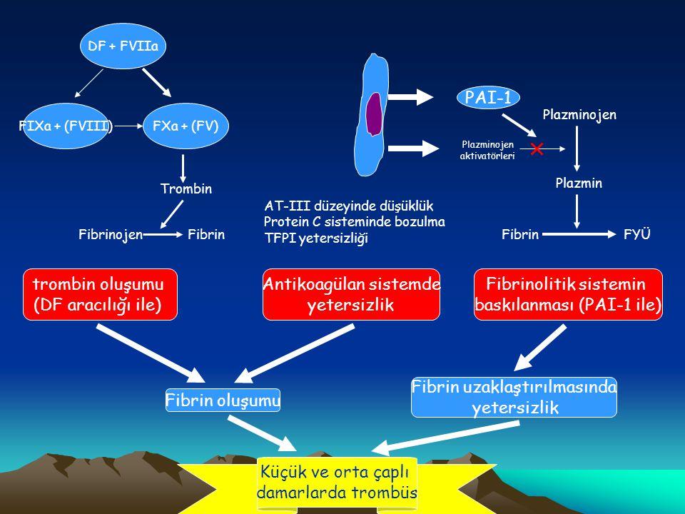 Thrombus in capillers Decreased anticoagulatıon trombin formation (DF) Fibrin formation AT-III level decrease Sürekli trombin oluşumuna bağlı tüketim Aktive nötrofillerden salınan elastaza bağlı yıkım AT sentezinin bozulması Protein C Endotelde trombomodulin sunumunda azalma PC sentezinde bozulma Serbest PS düzeyinde azalma TFPI decrease TFPI düzeyi normal FibrinogenFibrin Thrombin DF + FVIIa FIXa + (FVIII)FXa + (FV)