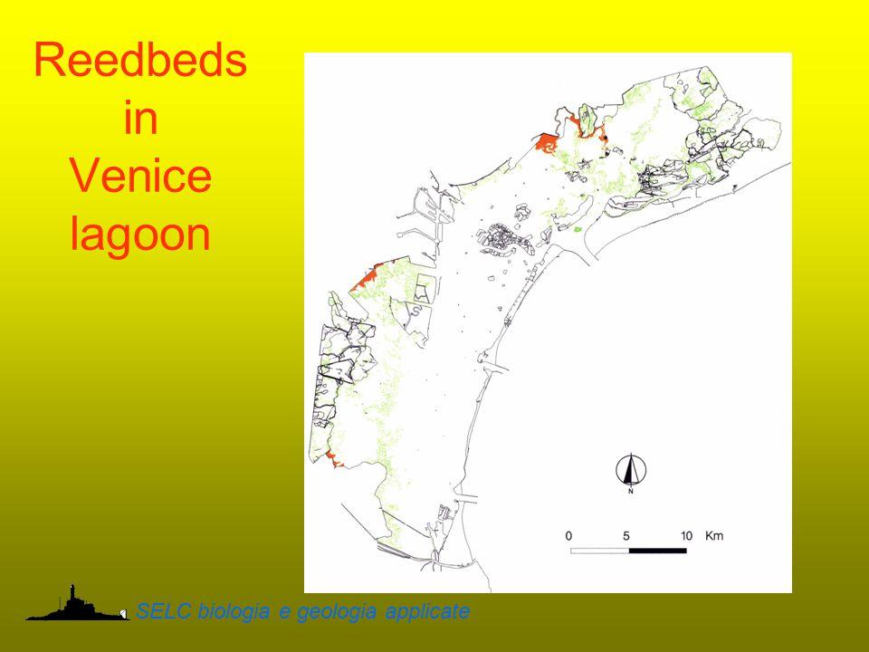 Reedbeds in Venice lagoon SELC biologia e geologia applicate
