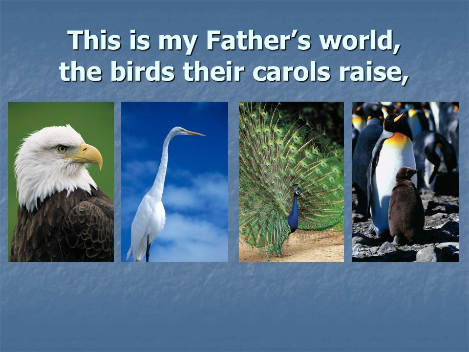 This is my Father's world, the birds their carols raise,