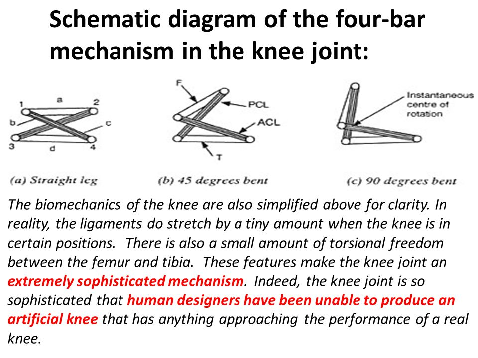 The irreducible mechanism of the knee joint is shown to contain at least 16 critical characteristics, each requiring thousands of precise units of information to exist simultaneously in the genetic code.