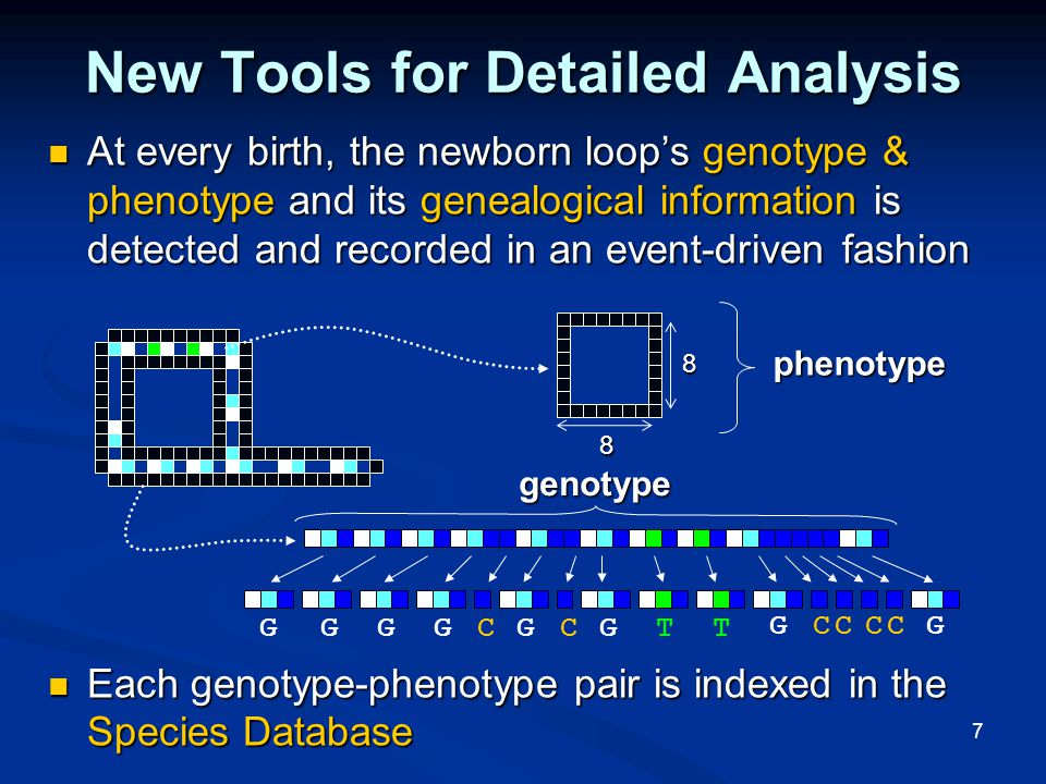 7 New Tools for Detailed Analysis At every birth, the newborn loop's genotype & phenotype and its genealogical information is detected and recorded in an event-driven fashion At every birth, the newborn loop's genotype & phenotype and its genealogical information is detected and recorded in an event-driven fashion Each genotype-phenotype pair is indexed in the Species Database Each genotype-phenotype pair is indexed in the Species Databasegenotype GGGGCGCGTT GCCCCG phenotype 8 8