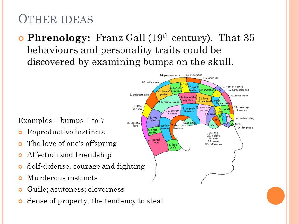 O THER IDEAS Phrenology: Franz Gall (19 th century). That 35 behaviours and personality traits could be discovered by examining bumps on the skull. Ex