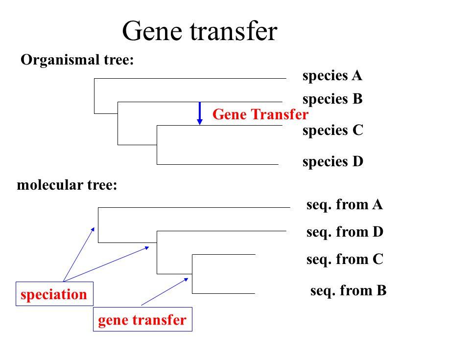 Gene transfer Organismal tree: species B species A species C species D Gene Transfer seq.