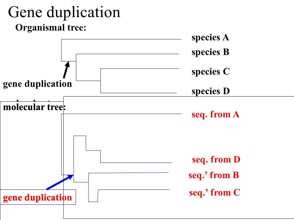 Gene duplication gene duplication Organismal tree: species B species A species C species D molecular tree: seq.