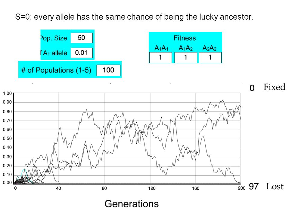 S=0: every allele has the same chance of being the lucky ancestor.