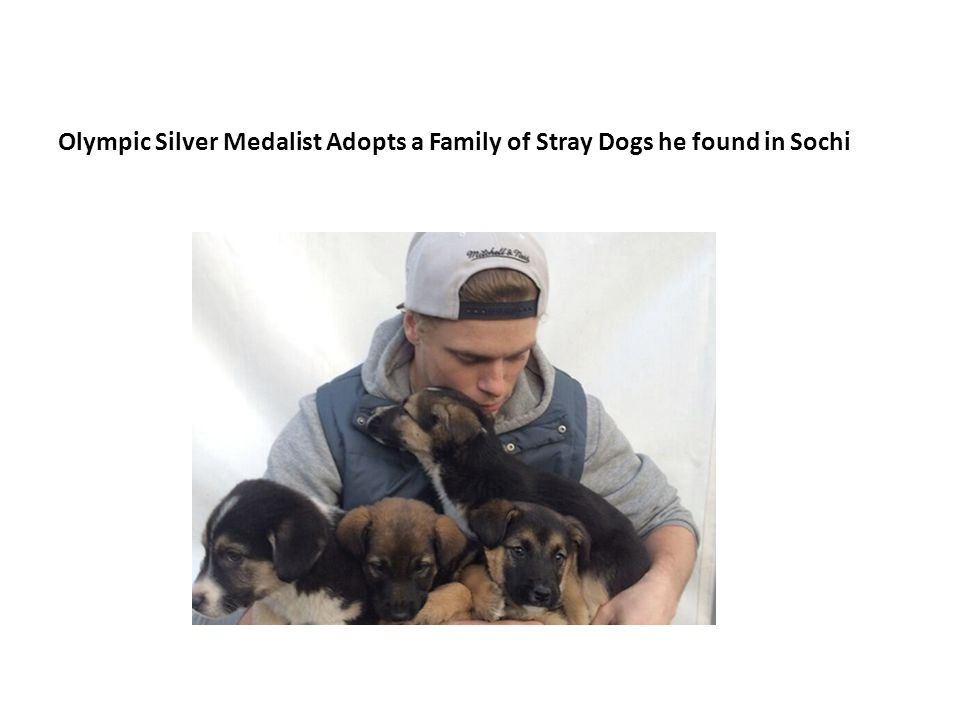 Olympic Silver Medalist Adopts a Family of Stray Dogs he found in Sochi