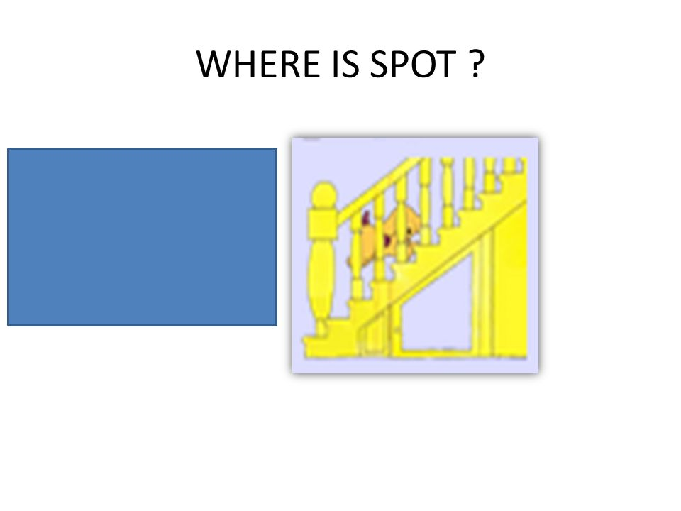 WHERE IS SPOT ? Spot is on the stairs.