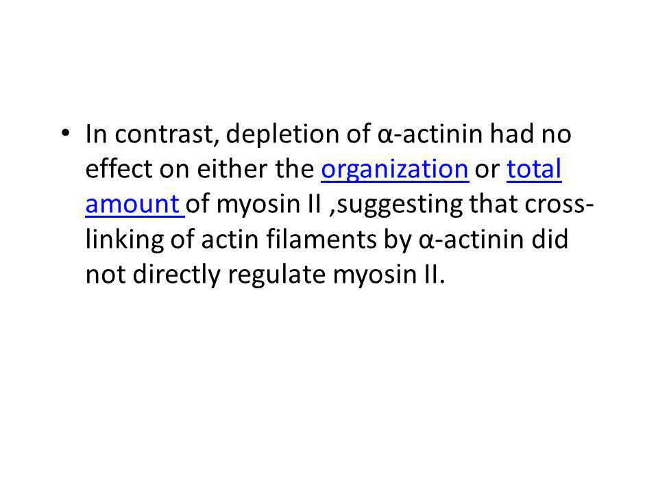 In contrast, depletion of α-actinin had no effect on either the organization or total amount of myosin II,suggesting that cross- linking of actin filaments by α-actinin did not directly regulate myosin II.organizationtotal amount