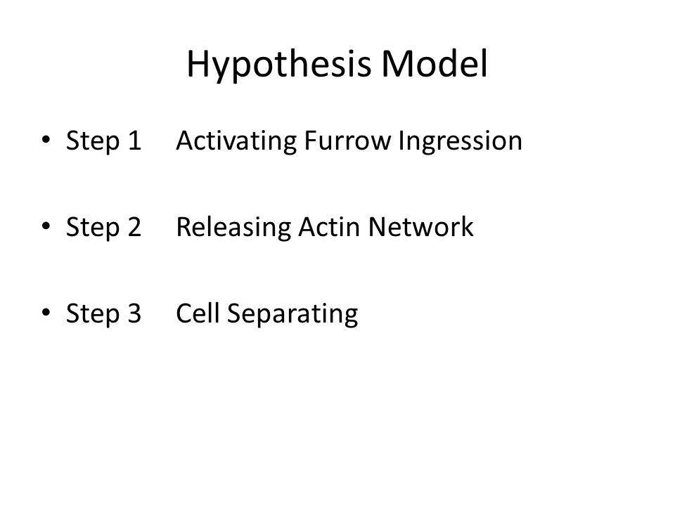 Hypothesis Model Step 1Activating Furrow Ingression Step 2Releasing Actin Network Step 3Cell Separating