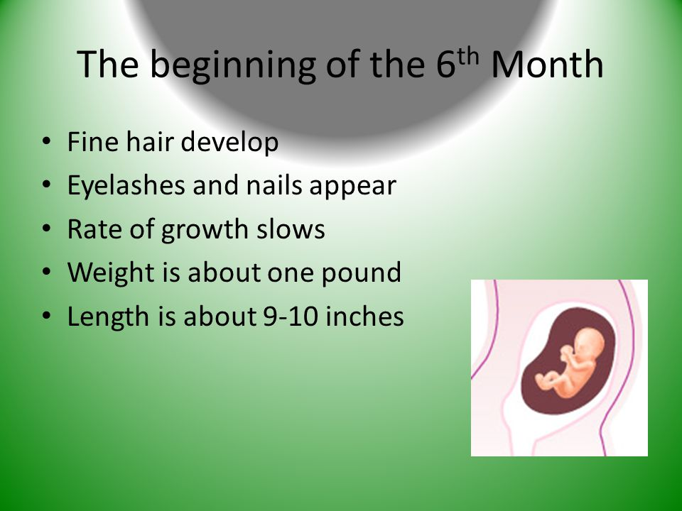 The beginning of the 6 th Month Fine hair develop Eyelashes and nails appear Rate of growth slows Weight is about one pound Length is about 9-10 inche
