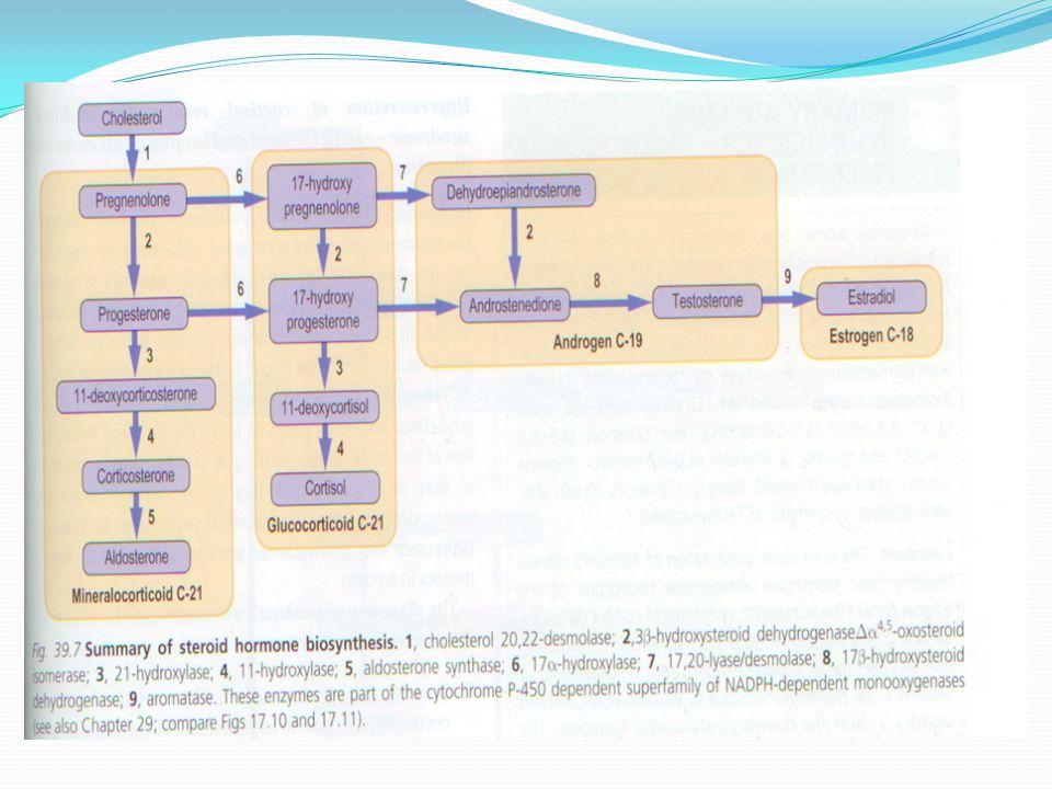 Synthesis of glucocorticoids C17 C21 C11 17 21 11 hydroxylations Endoplasmic reticulum mitochondria