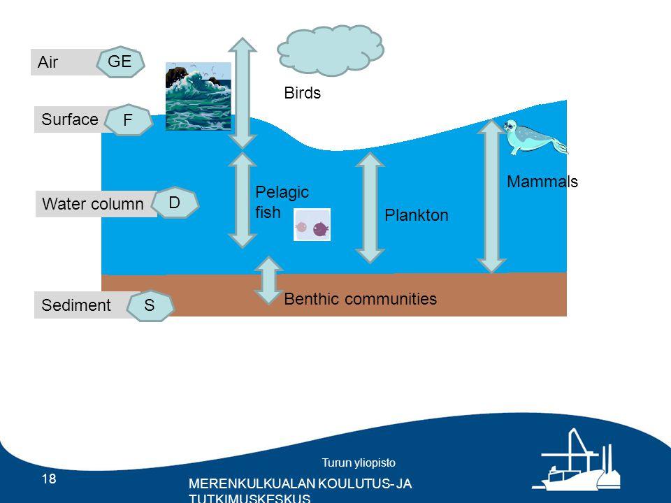 Turun yliopisto MERENKULKUALAN KOULUTUS- JA TUTKIMUSKESKUS 18 Birds Pelagic fish Plankton Mammals Benthic communities Sediment Water column Surface Air GE D F S